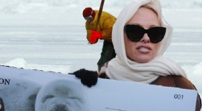 Marathon Runner Pamela Anderson Unwittingly Funds Seal Hunt
