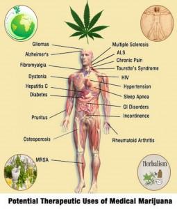 herbal-benefits-of-medical-marijuana_513da00183519_w1500
